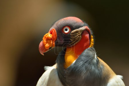 Photo pour Oiseau tropical portrait rapproché - image libre de droit