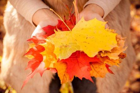 Photo pour Tenir les feuilles en main en automne - image libre de droit