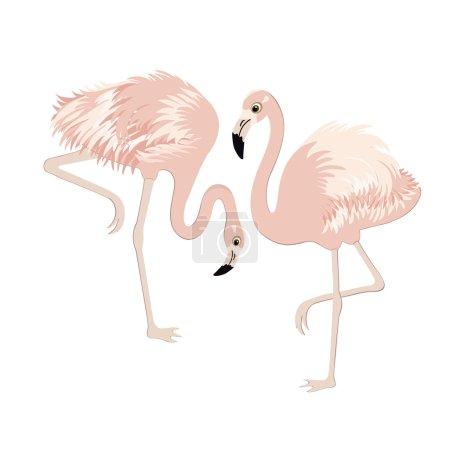Pair of cute pink flamingos