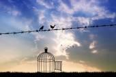 free birds on wire