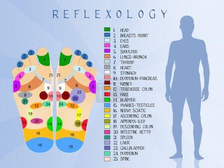 Photo pour Illustration de la réflexologie diagramme de pied - image libre de droit