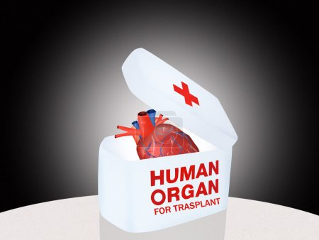 Photo pour Illustration d'un organe humain pour trasplant - image libre de droit