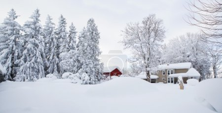 Photo pour Snow covered landscape after a record-breaking snowfall in the Buffalo, New York Area. Image shows early 20th Century style farm buildings with bare pine and hard wood trees covered in snow. - image libre de droit