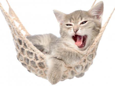 Cute tabby kitten yawns lying in a hammock