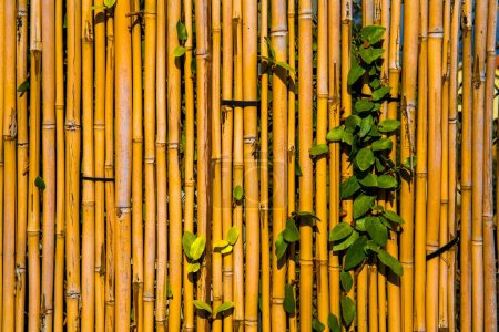 Photo for Background of leaves, trellises and branches, close-up - Royalty Free Image