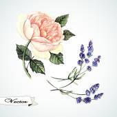 Rose, akvarel a travarica