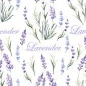 Botanické vzorek akvarel levandule