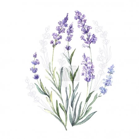 Illustration for Watercolor vector Lavender. Watercolor.Vector illustration. Illustration for greeting cards, invitations, and other printing projects. - Royalty Free Image