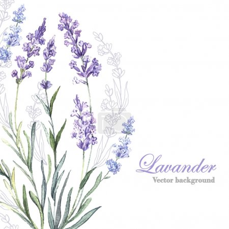 Illustration for Watercolor vector Lavender background. Watercolor.Vector illustration. Illustration for greeting cards, invitations, and other printing projects. - Royalty Free Image