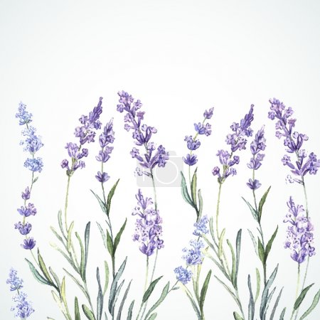 Illustration for Watercolor background of Lavender. Watercolor. Vector illustration. Illustration for greeting cards, invitations, and other printing projects. - Royalty Free Image