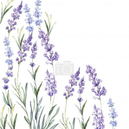Illustration for Watercolor vintage background of Lavender. Watercolor.Vector illustration. Illustration for greeting cards, invitations, and other printing projects - Royalty Free Image