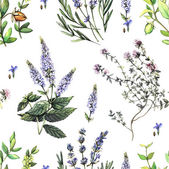Watercolor decorative pattern with medicinal plants.