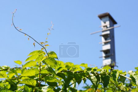 Birdhouse on a sky background out of focus. In the...