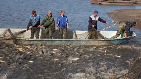 Fishermen Harvest Carp Ahead of Christmas