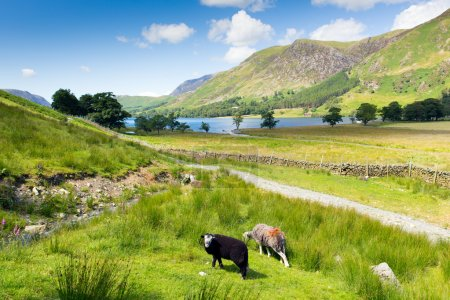 Photo for Buttermere English Lake District Cumbria England uk on a beautiful sunny summer day surrounded by fells including High Stile, Robinson, Fleetwith Pike, Haystacks, and Grasmoor - Royalty Free Image