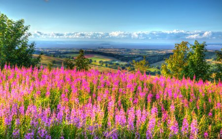 Photo for Quantock Hills Somerset England UK countryside views towards Hinkley Point Nuclear Power station and Bristol Channel on a summer evening from Cothelstone hill - Royalty Free Image