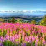Quantock Hills Somerset England UK countryside vie...