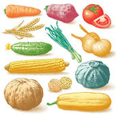 Vegetables Fruits And Plants Colour Vector