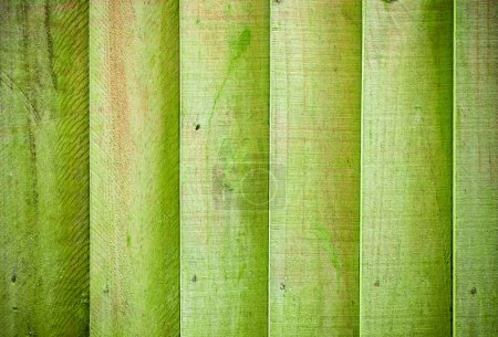 Mossy wooden background texture