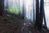 Rocky path through old foggy forest