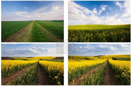 Set of beautiful countryside landscape