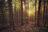 Vintage style photo of old forest at sunny morning