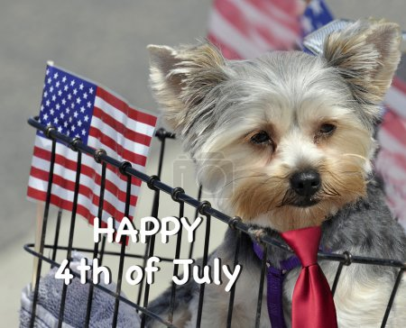 Dog with words 'Happy Fourth Of July'
