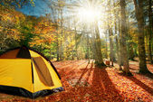 Touristic tent in a quiet autumn forest