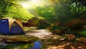 tent in a sunny forest