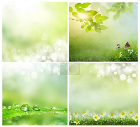 Photo for A set of photos of spring backgrounds - Royalty Free Image