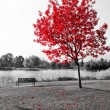 Empty park bench under red tree in black and white...