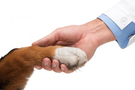 Concept of friendship between dog and man