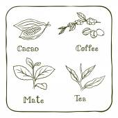 Various herbals - coffee mate cacao and tea