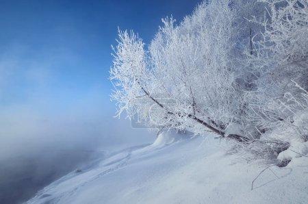 Photo pour Paysage hivernal avec arbres recouverts de givre au bord d'une rivière brumeuse - image libre de droit