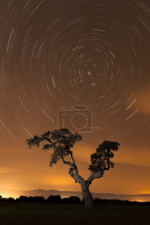 Photo for Nice night landscape with tree under the sky full of stars - Royalty Free Image