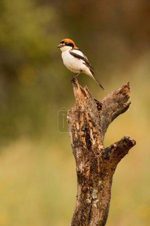 Wild bird perched on branch