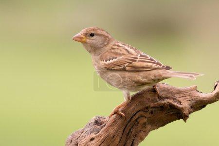Photo pour Bel oiseau sauvage perché sur une branche dans la nature - image libre de droit