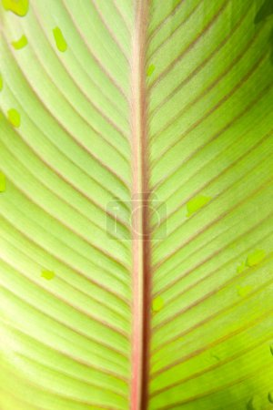 green plant leaf with drops