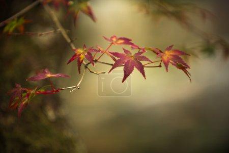 Photo pour Feuilles d'automne, foyer peu profond - image libre de droit