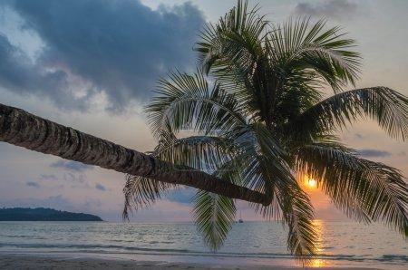 Coconut palm in  tropical beach