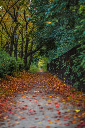 Autumn alley with pathway