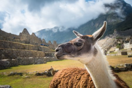 Foto de Machu Picchu, Patrimonio de la Humanidad por la UNESCO. Una de las Nuevas Siete Maravillas del Mundo . - Imagen libre de derechos