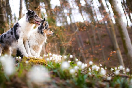 Border collie dog posing in nature