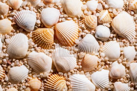 beautiful seashells background