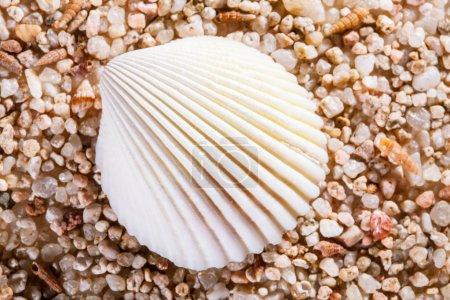 marine seashell on the stones