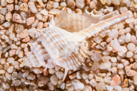 macro shot of beautiful seashell