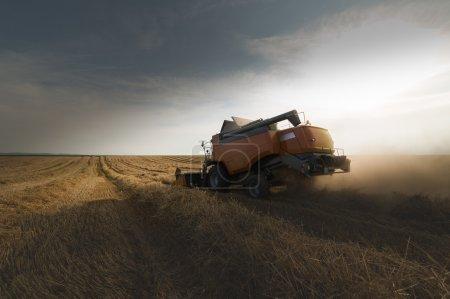 Photo pour Récolte de champ de haricots de soja en été - image libre de droit