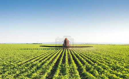 Photo for Tractor spraying soybean field - Royalty Free Image