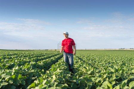 farmer in soybean fields