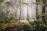 Wet autumn forest with fog